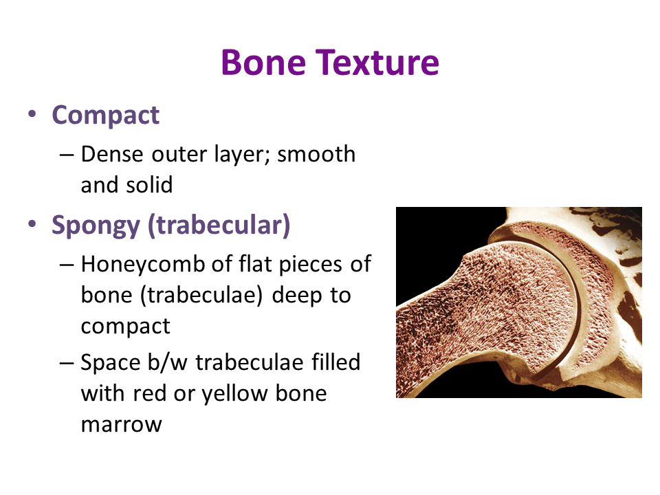 Bone Texture Compact Spongy (trabecular)