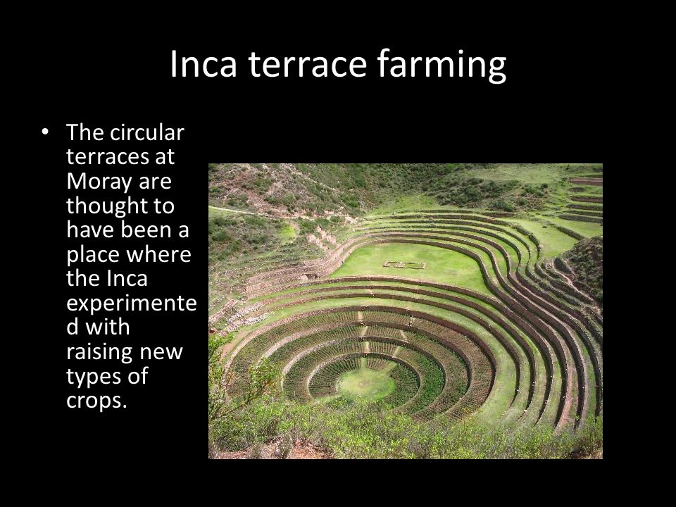 Inca terrace farming The circular terraces at Moray are thought to have been a place where the Inca experimented with raising new types of crops.