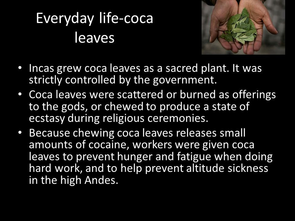 Everyday life-coca leaves