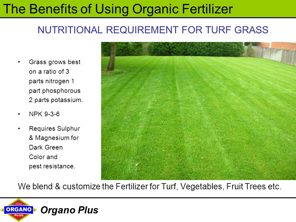 NUTRITIONAL REQUIREMENT FOR TURF GRASS