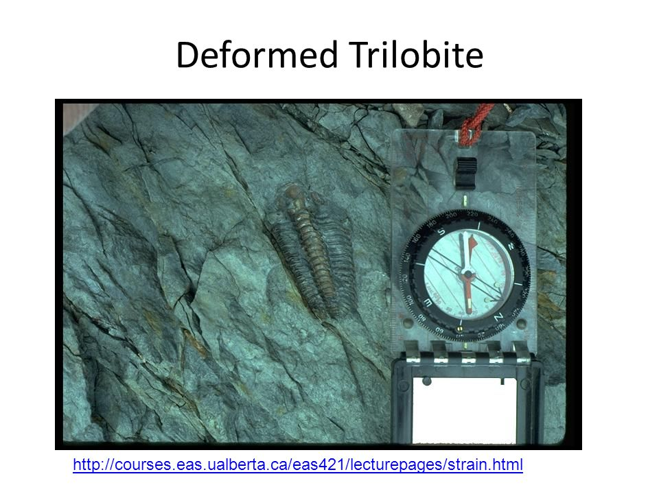 Deformed Trilobite http://courses.eas.ualberta.ca/eas421/lecturepages/strain.html