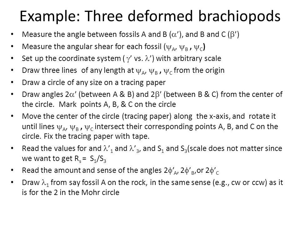Example: Three deformed brachiopods