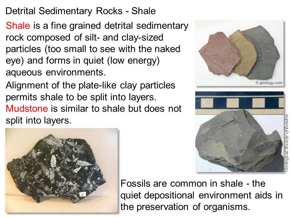 Detrital Sedimentary Rocks - Shale