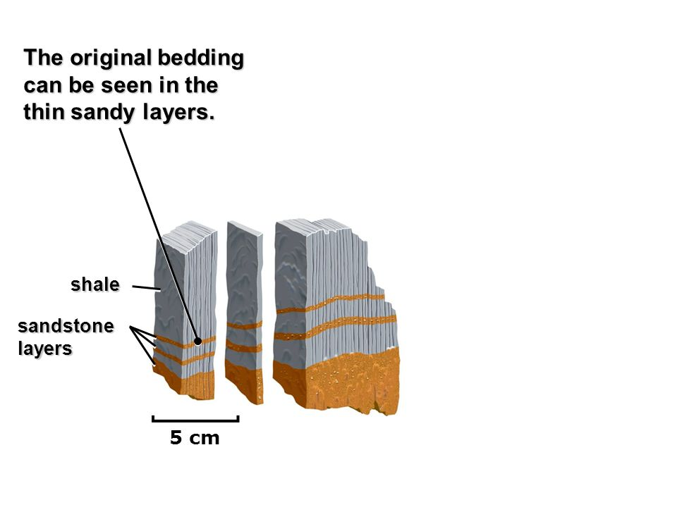 The original bedding can be seen in the thin sandy layers. shale