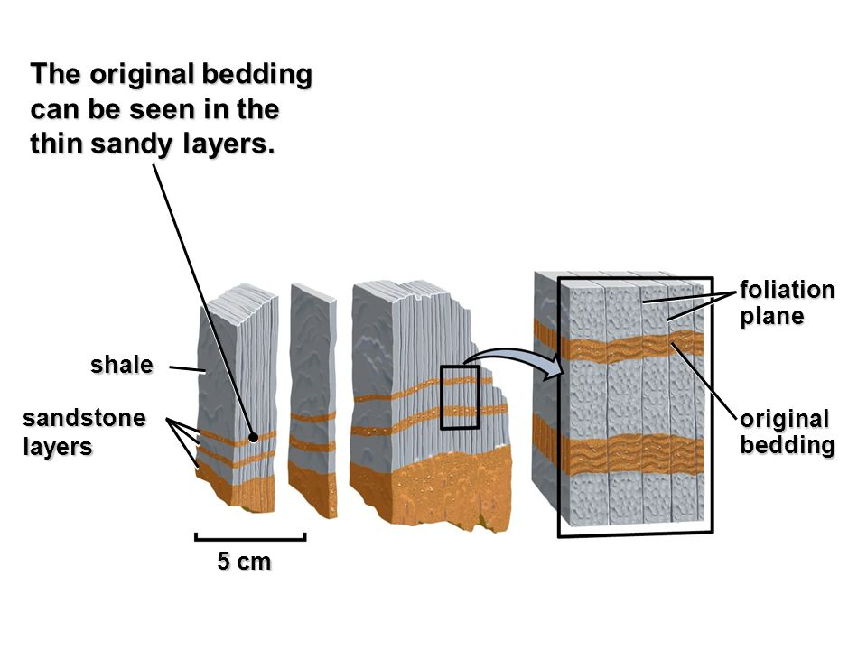 The original bedding can be seen in the thin sandy layers. foliation
