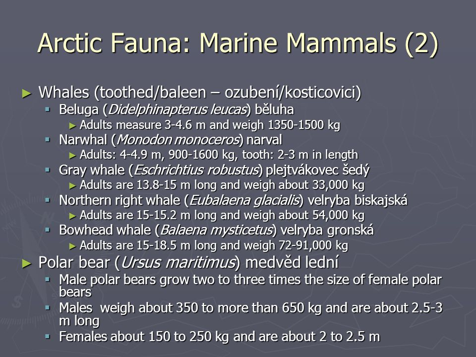 Arctic Fauna: Marine Mammals (2)