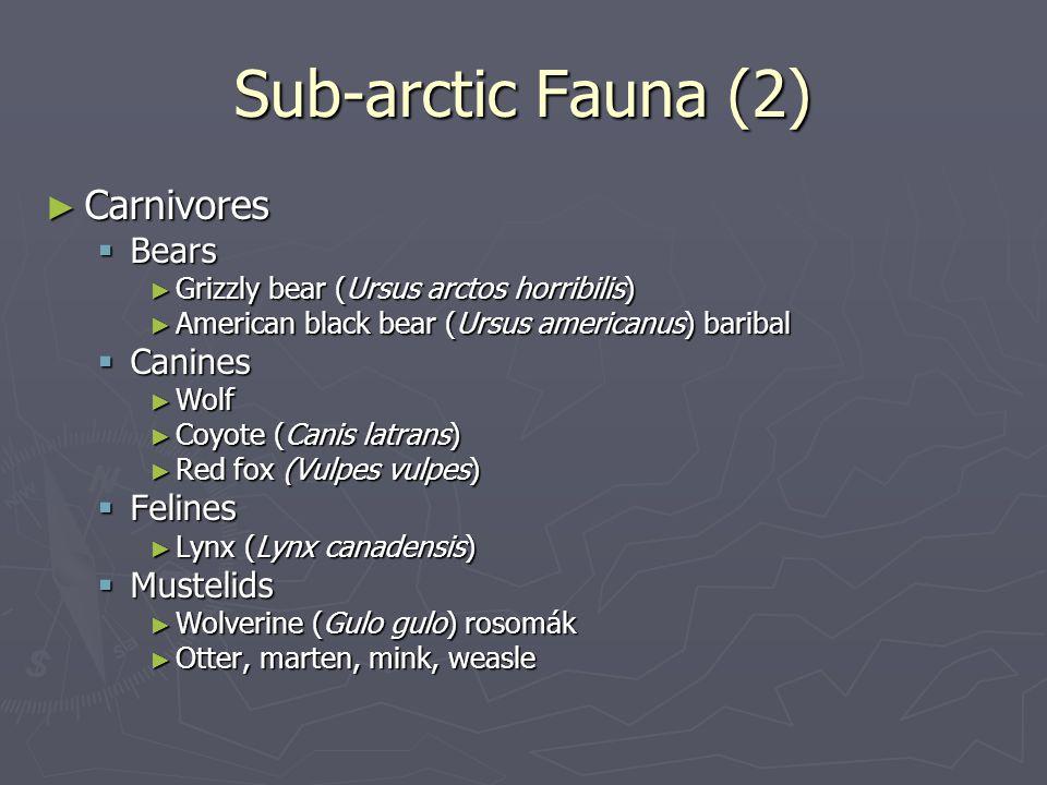 Sub-arctic Fauna (2) Carnivores Bears Canines Felines Mustelids