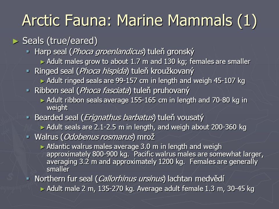 Arctic Fauna: Marine Mammals (1)