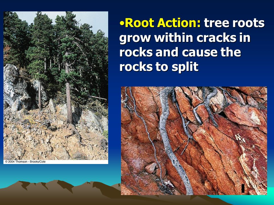 Root Action: tree roots grow within cracks in rocks and cause the rocks to split