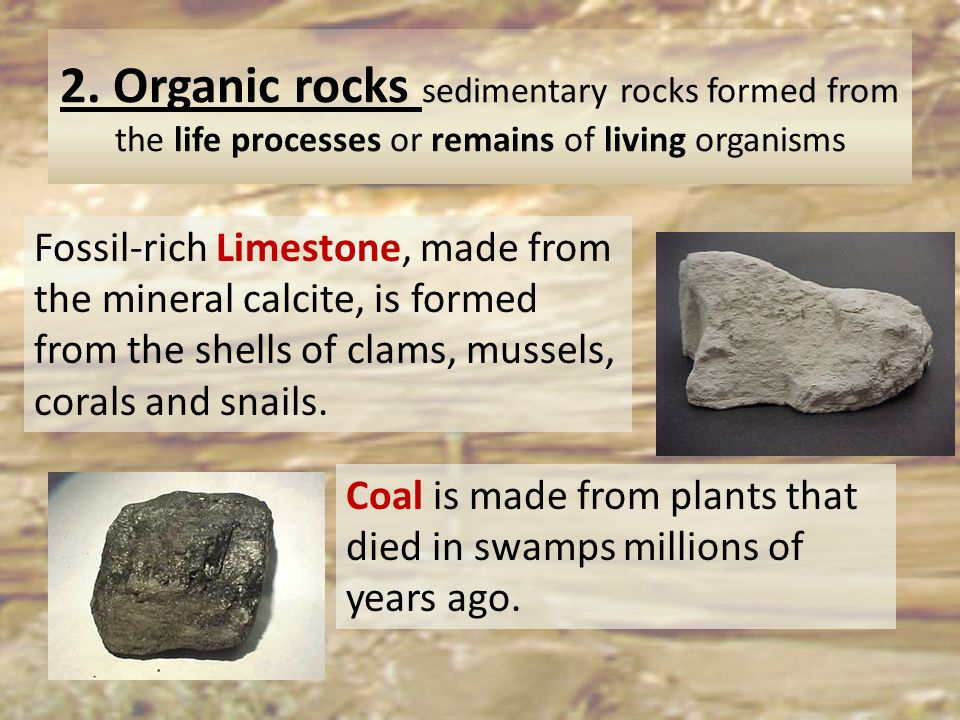 2. Organic rocks sedimentary rocks formed from the life processes or remains of living organisms