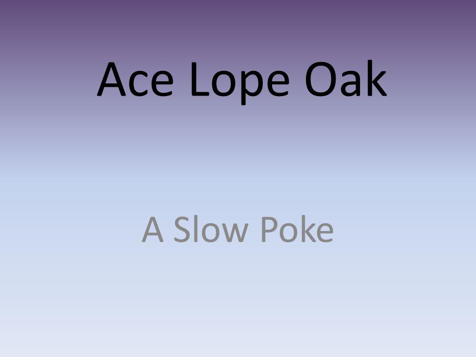 Ace Lope Oak A Slow Poke