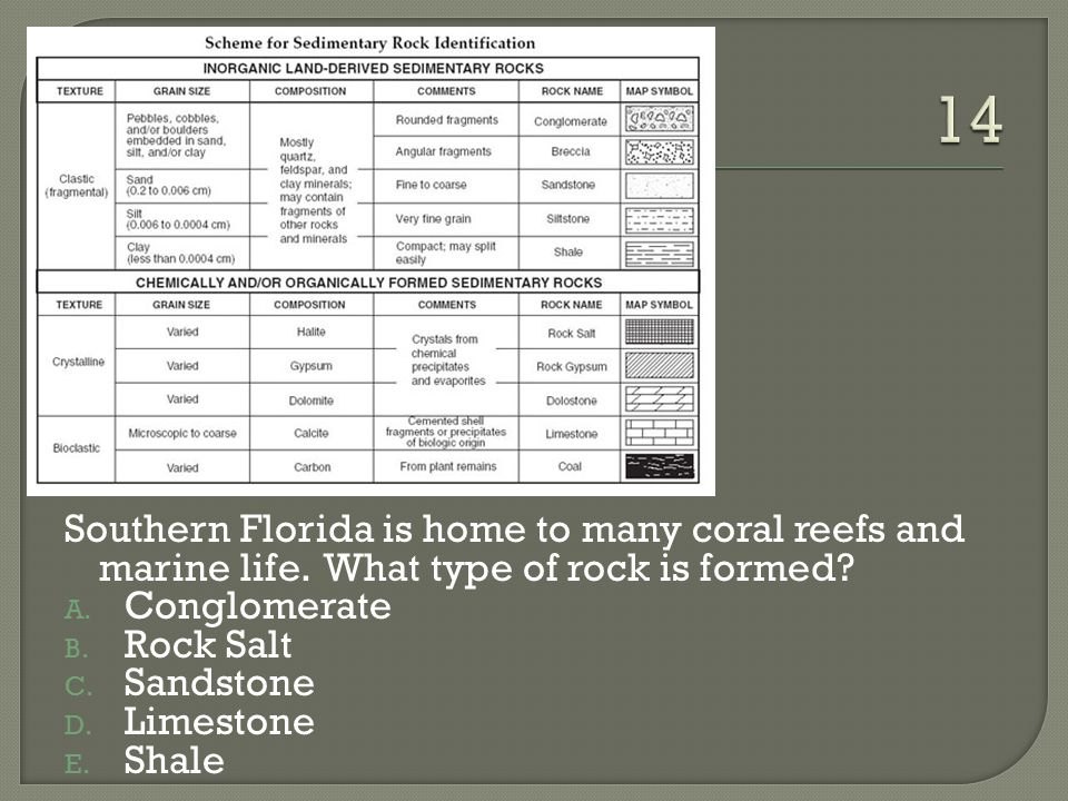 14 Southern Florida is home to many coral reefs and marine life. What type of rock is formed Conglomerate.