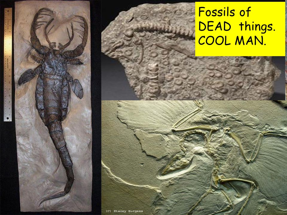 Fossils of DEAD things. COOL MAN.