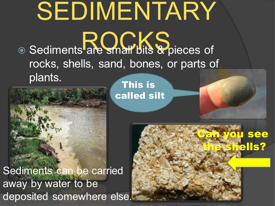 SEDIMENTARY ROCKS Sediments are small bits & pieces of rocks, shells, sand, bones, or parts of plants.
