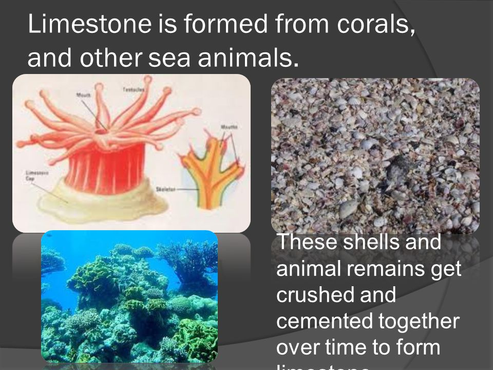 Limestone is formed from corals, and other sea animals.