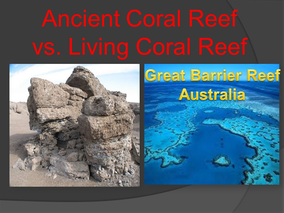Ancient Coral Reef vs. Living Coral Reef