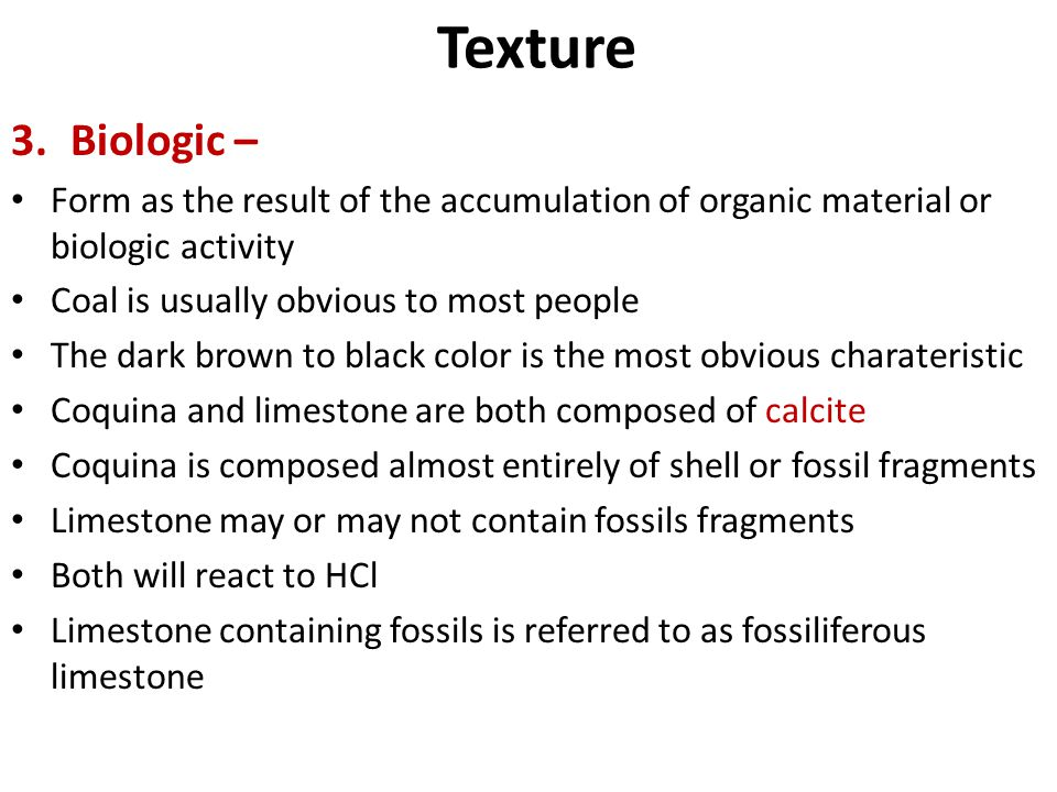 Texture Biologic – Form as the result of the accumulation of organic material or biologic activity.