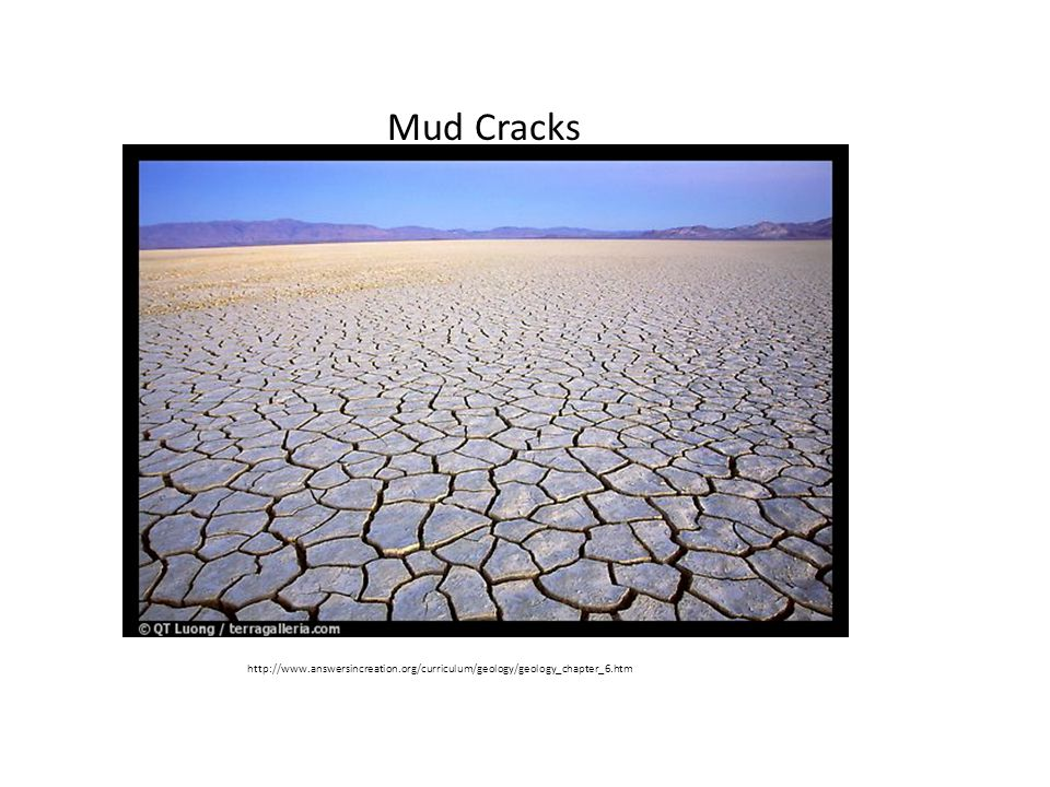 Mud Cracks http://www.answersincreation.org/curriculum/geology/geology_chapter_6.htm