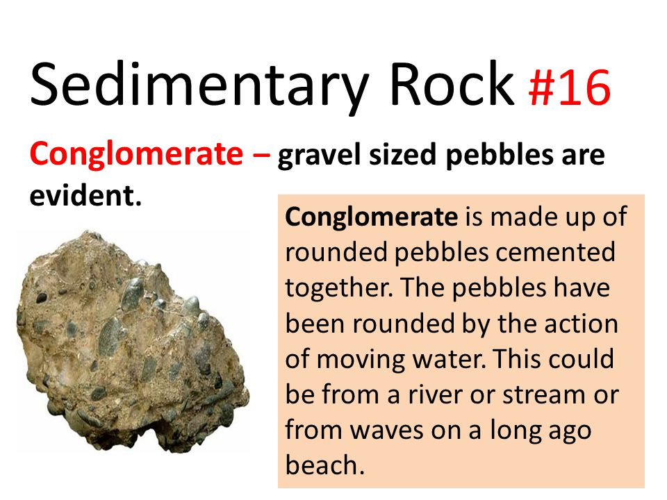 Sedimentary Rock #16 Conglomerate – gravel sized pebbles are evident.