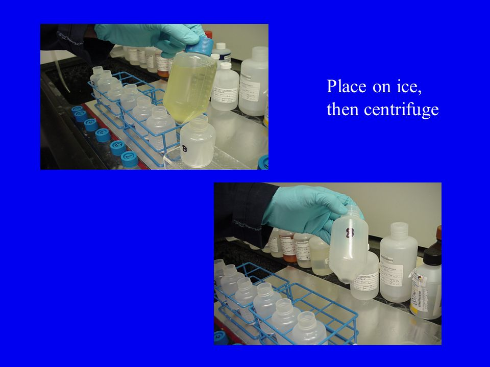 Place on ice, then centrifuge