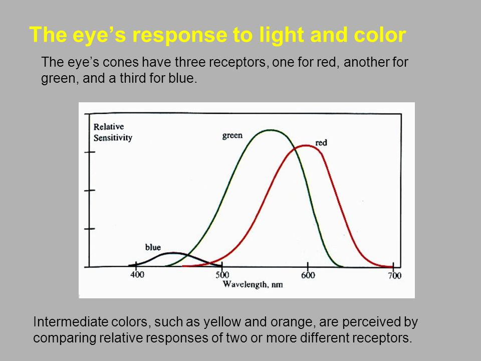 The eye's response to light and color