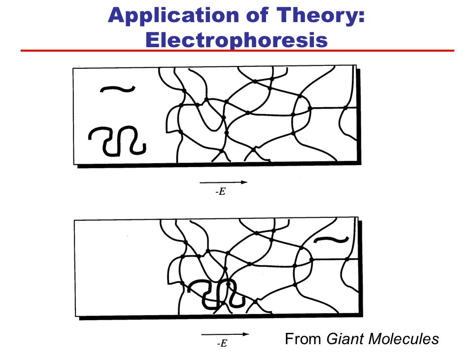Application of Theory: Electrophoresis