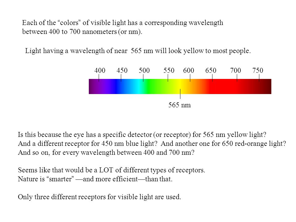 Each of the colors of visible light has a corresponding wavelength