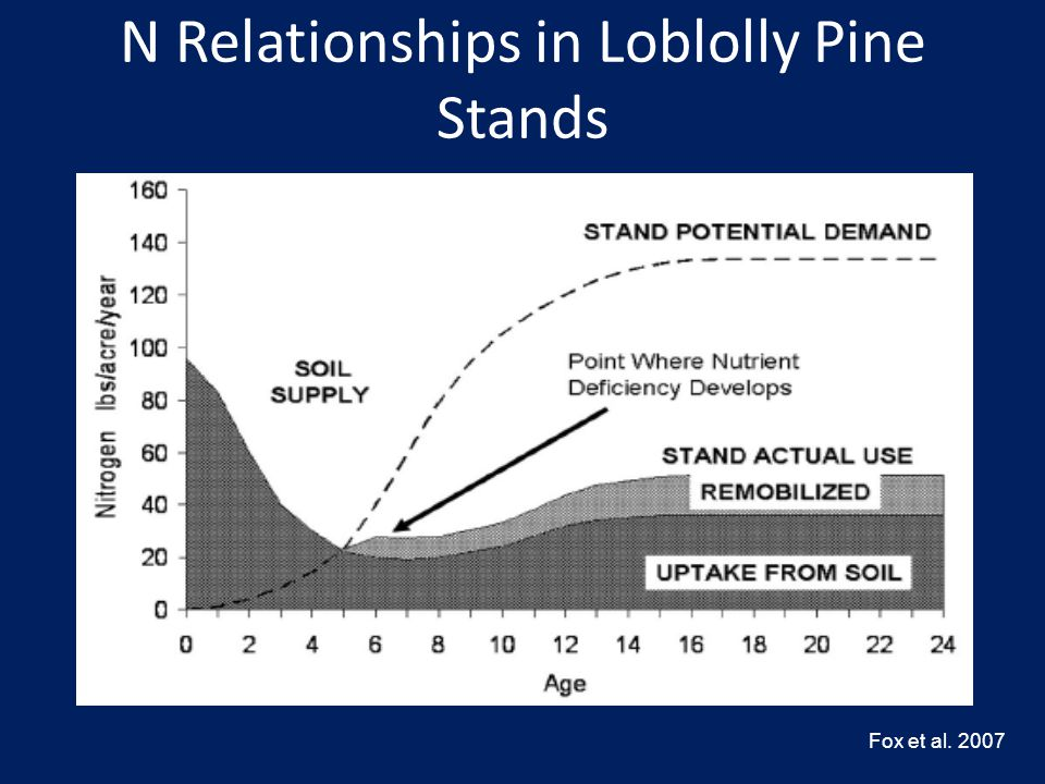 N Relationships in Loblolly Pine Stands