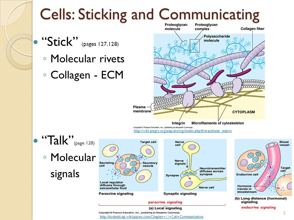 Cells: Sticking and Communicating