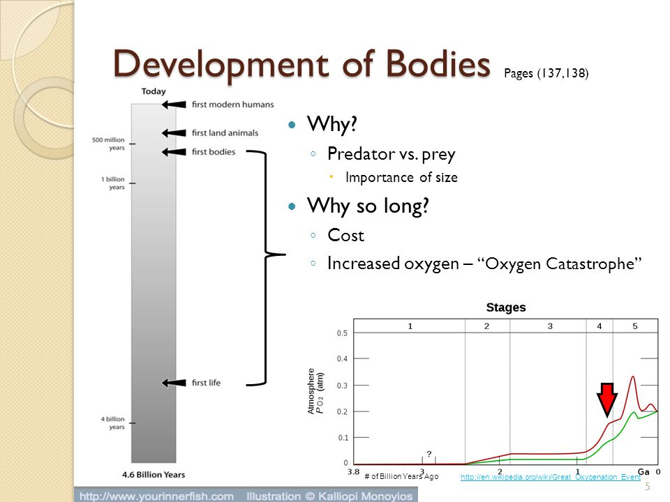 Development of Bodies Why Why so long Predator vs. prey Cost