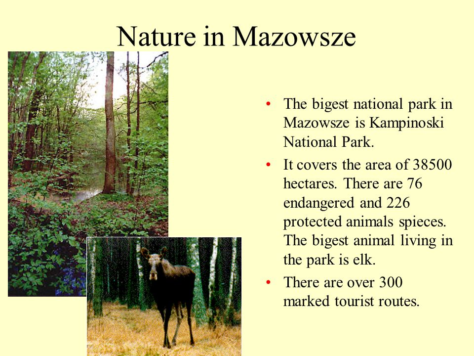 Nature in Mazowsze The bigest national park in Mazowsze is Kampinoski National Park.