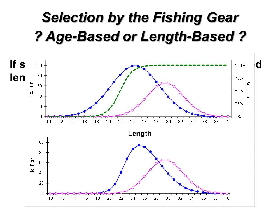 Selection by the Fishing Gear Age-Based or Length-Based