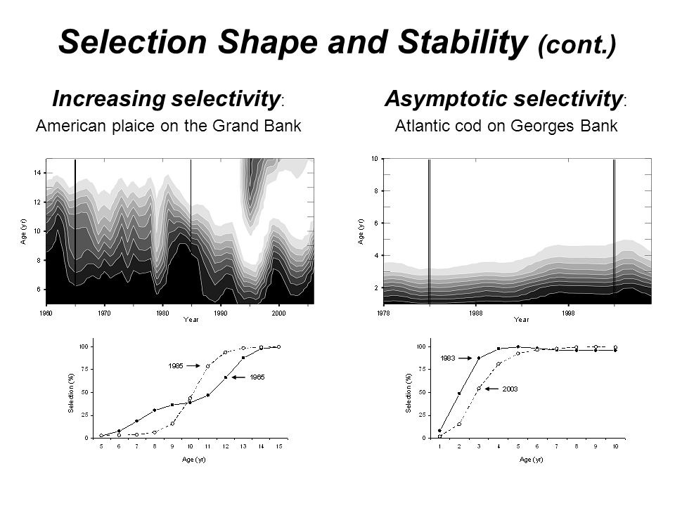 Selection Shape and Stability (cont.)
