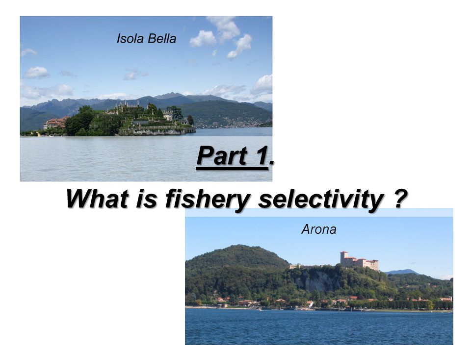 What is fishery selectivity
