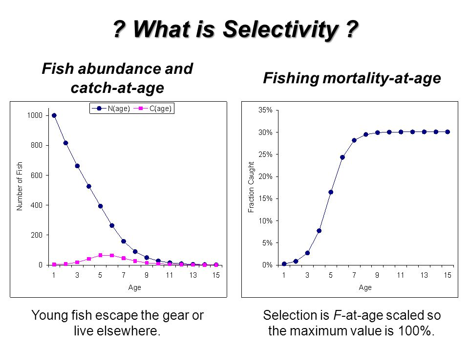 Fish abundance and catch-at-age Fishing mortality-at-age