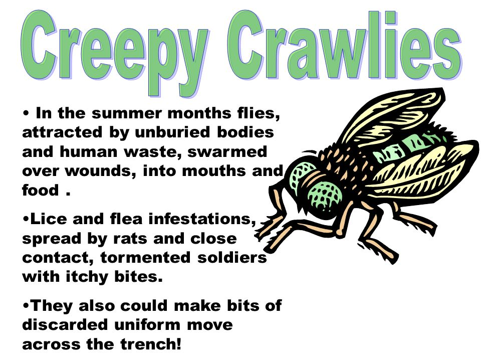 Creepy Crawlies In the summer months flies, attracted by unburied bodies and human waste, swarmed over wounds, into mouths and food .