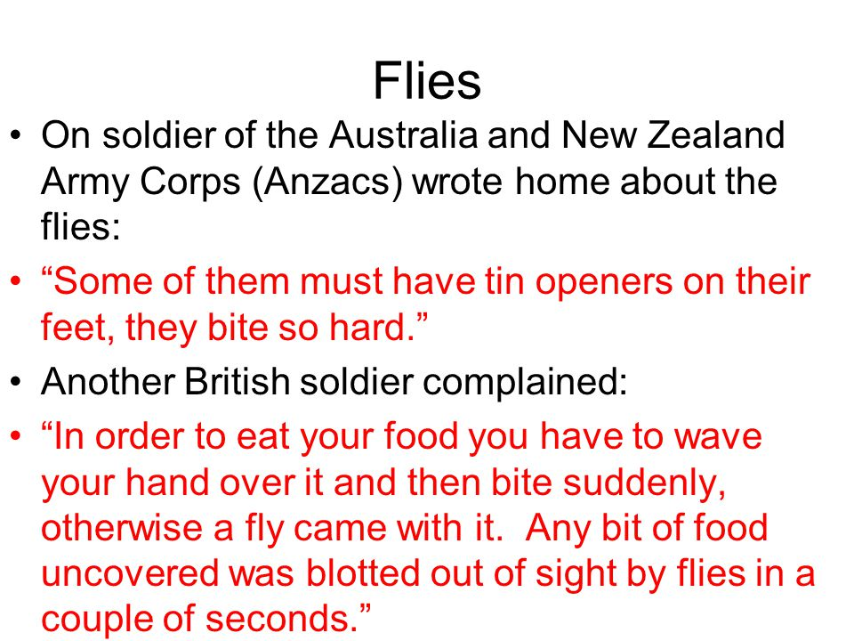 Flies On soldier of the Australia and New Zealand Army Corps (Anzacs) wrote home about the flies: