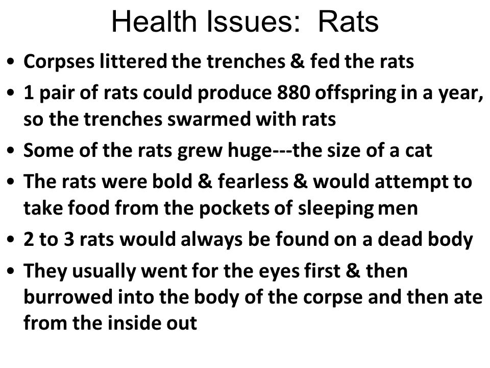 Health Issues: Rats Corpses littered the trenches & fed the rats