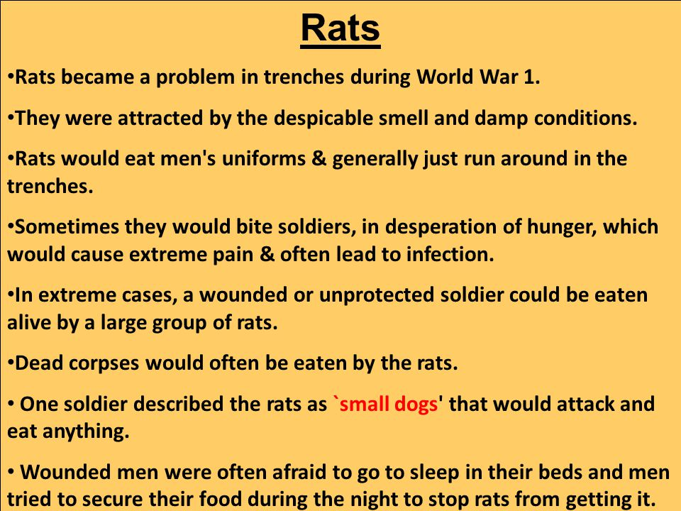 Rats Rats became a problem in trenches during World War 1.