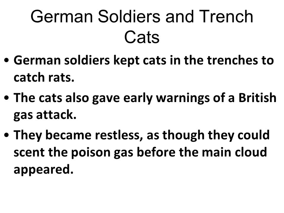 German Soldiers and Trench Cats