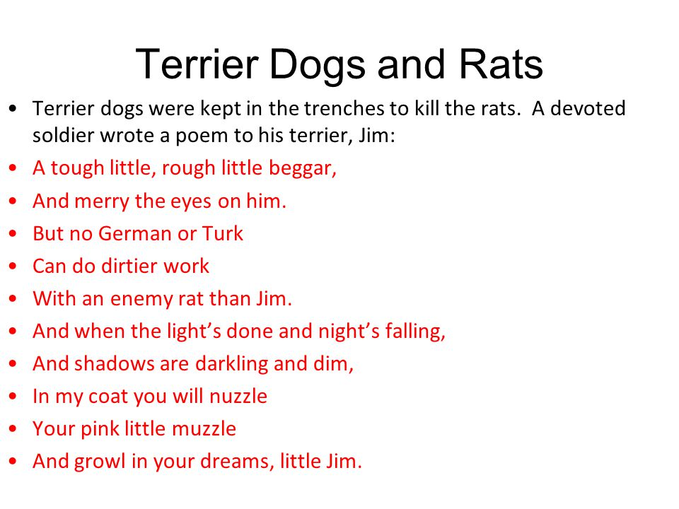 Terrier Dogs and Rats Terrier dogs were kept in the trenches to kill the rats. A devoted soldier wrote a poem to his terrier, Jim: