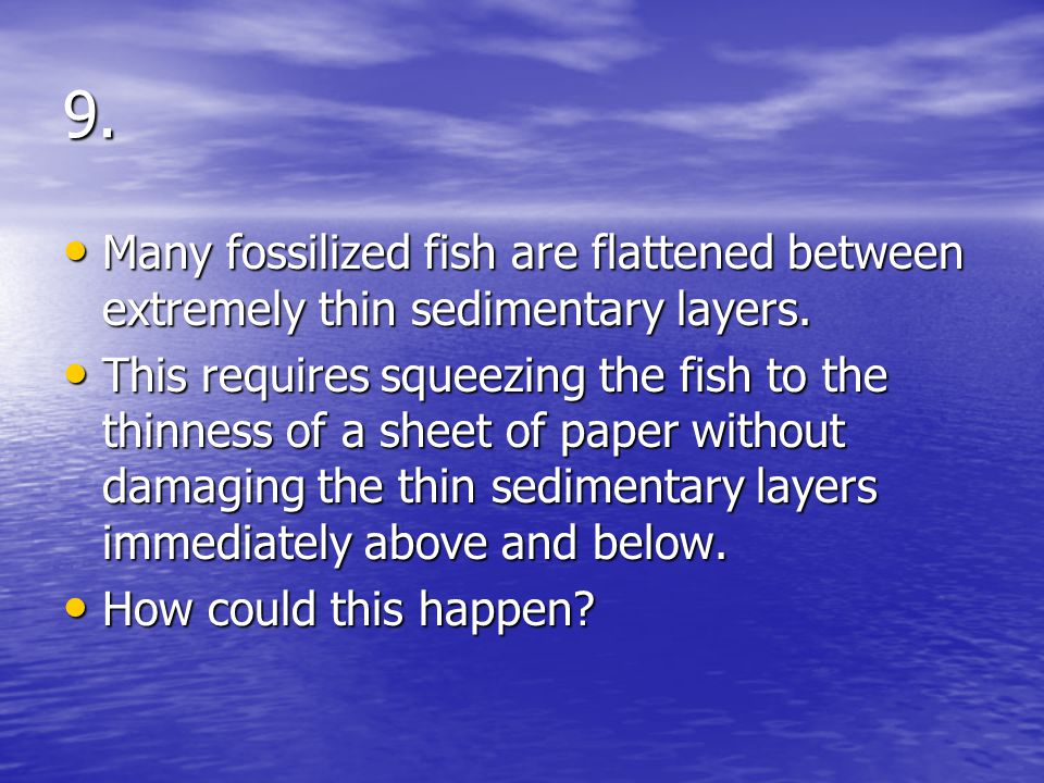 9. Many fossilized fish are flattened between extremely thin sedimentary layers.