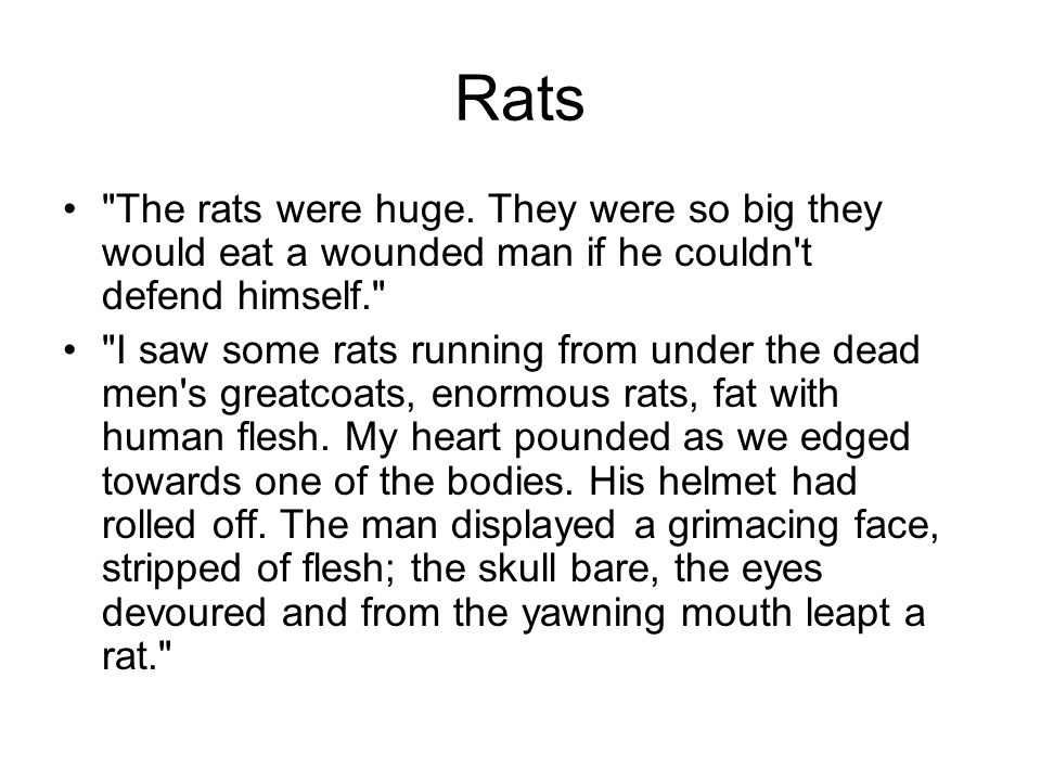 Rats The rats were huge. They were so big they would eat a wounded man if he couldn t defend himself.