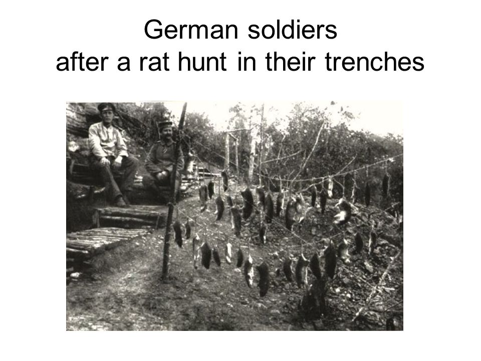German soldiers after a rat hunt in their trenches