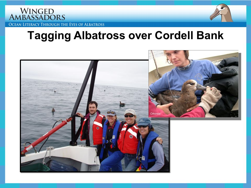 Tagging Albatross over Cordell Bank
