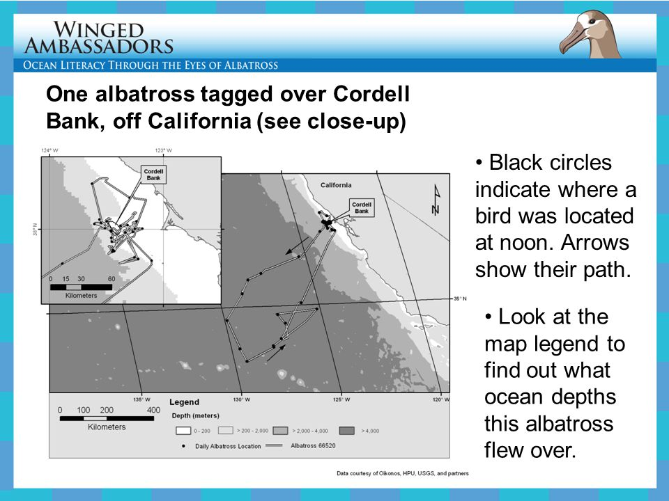 One albatross tagged over Cordell Bank, off California (see close-up)