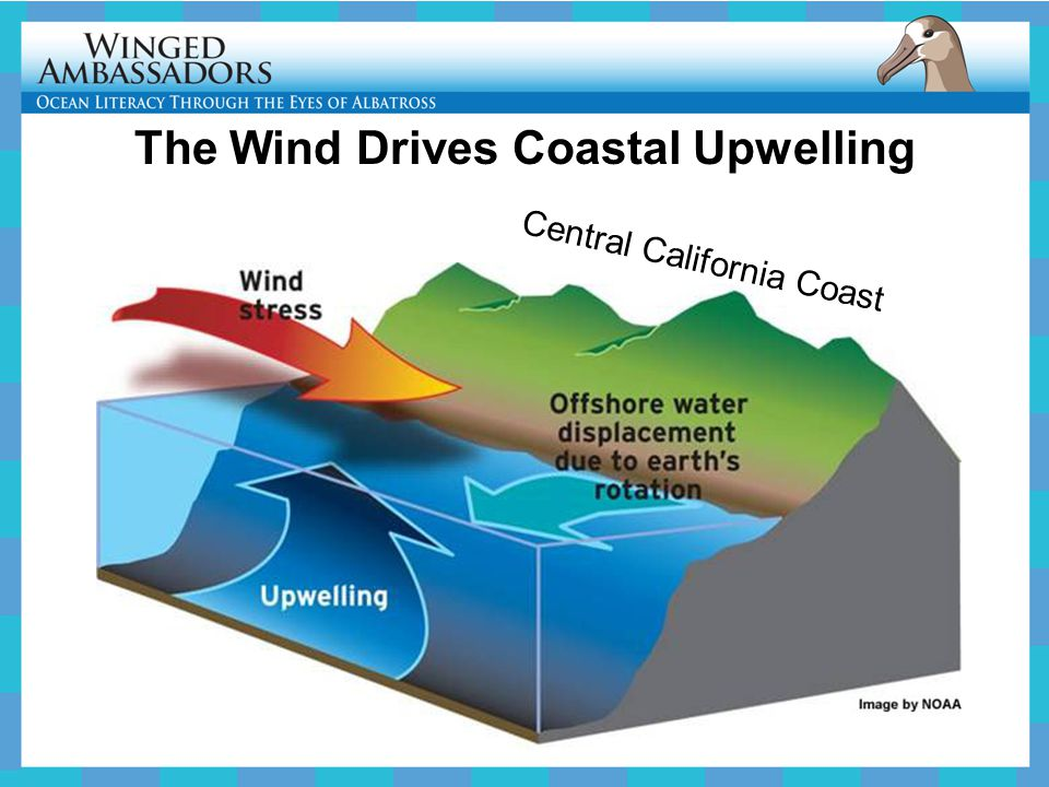 The Wind Drives Coastal Upwelling