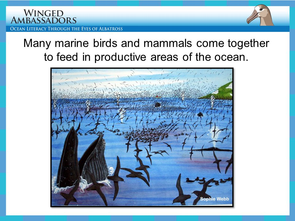 Many marine birds and mammals come together to feed in productive areas of the ocean.