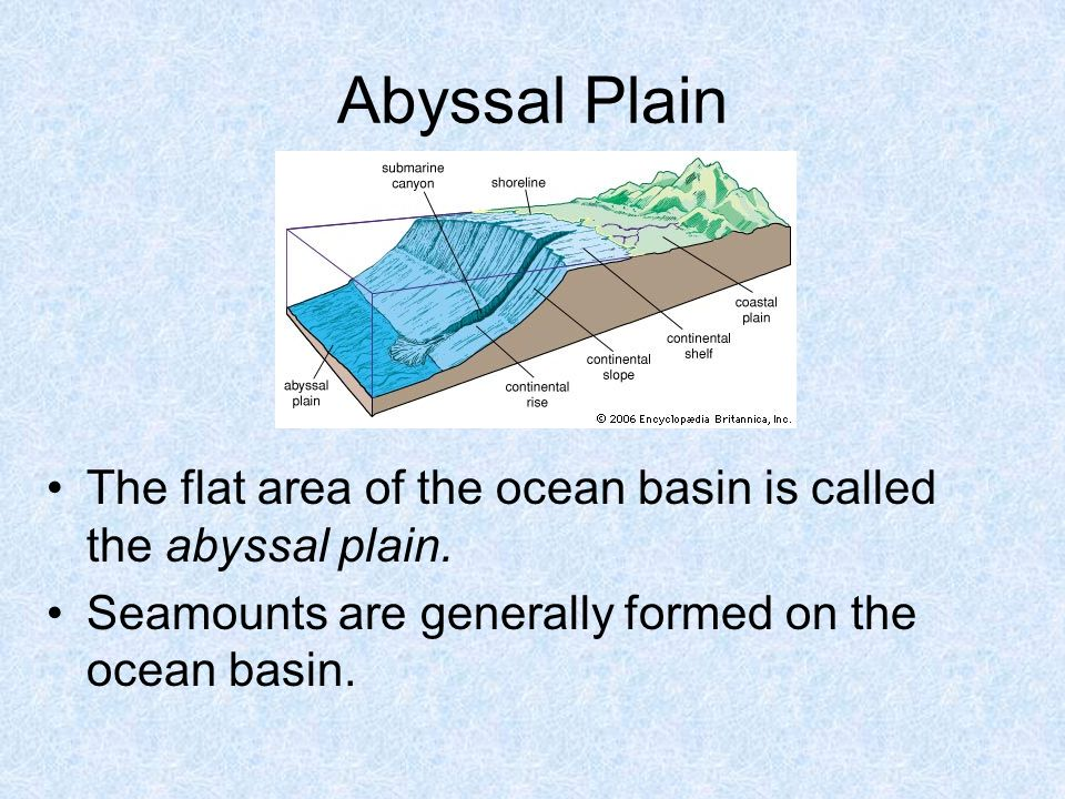 Abyssal Plain The flat area of the ocean basin is called the abyssal plain.