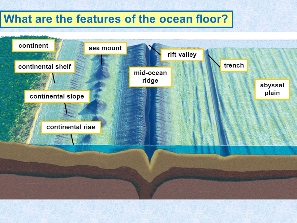 Landforms of the ocean ppt video online download for Sentence of floor
